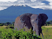Mt.kilimanjaro Prints - African Bush Elephant Print by Kathryn Elliget