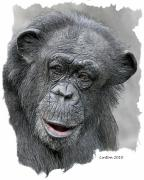 Chimpanzee Digital Art Prints - African Chimpanzee Print by Larry Linton