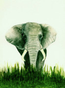 Africa Art Prints - African Elephant Print by Michael Vigliotti