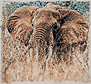 Elephant Digital Art Posters - African Elephant Poster by Phyllis Kaltenbach