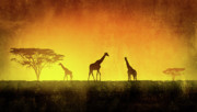 Giraffe Digital Art Originals - African Landscape by Giordano Aita