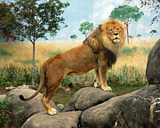 Rosamond Posters - African Lion Poster by Kathy Eastmond