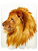 Lion Paintings - African Male Lion by Michael Vigliotti