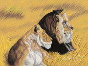 Lion Pastels - African Royalty by Lana Tyler