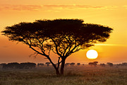 Silhouettes Framed Prints - African Sunset Framed Print by Richard Garvey-Williams