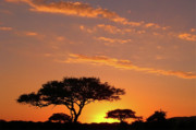 Red Posters - African Sunset Poster by Sebastian Musial