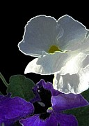 Floral Notecards Posters - African Violet Poster by Dale   Ford