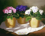 Potted Flowers Prints - African Violets Print by Linda Jacobus
