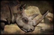 Saija  Lehtonen - African White Rhinoceros