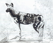 Dog Drawings Originals - African Wild Dog by CarrieAnn Reda