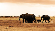 Love Game Prints - African wild elephants Print by Anna Omelchenko