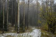 Santa Fe National Forest Photos - After A Hail Storm In The Santa Fe by Raul Touzon
