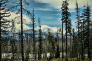 Snowy Mountain Photos - After the Fire by Bonnie Bruno