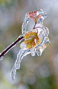 Lightscapes Photography Photos - After the Ice Storm by Sean Griffin