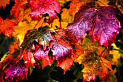 Autumn Leaves Acrylic Prints - After the Rain Acrylic Print by David Patterson
