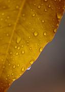 Autumn Leaf Prints - After the Rain Print by Stephen Anderson