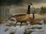 Canadian Geese Paintings - After the storm by Alan Carlson