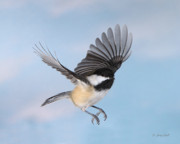 Birds In Flight Photos - Afternoon Flight by Gerry Sibell