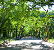 Central Park Photos - Afternoon In Central Park by Thomas Northcut