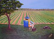 Vineyard Landscape Originals - Afternoon in the Vineyard by Tim Mattox
