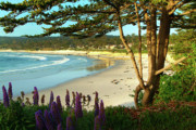 Big Sur Metal Prints - Afternoon on Carmel Beach Metal Print by Charlene Mitchell