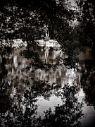 Tree Leaf On Water Photo Prints - Afternoon on the lake					 Print by Mariola Bitner