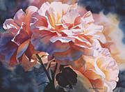 Orange Roses Posters - Afternoon Rose  Poster by Sharon Freeman