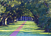 Oak Alley Plantation Photo Prints - Afternoon Sun on Oak Alley - Digital Painting Print by Carol Groenen