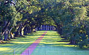 Oak Alley Plantation Photo Prints - Afternoon Sun on Oak Alley - Large  Print by Carol Groenen