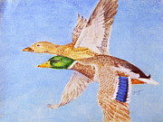 Mallards Pastels Posters - Against a Blue Sky Poster by Flo Hayes