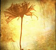 Flower Digital Art - Against all Odds by Photodream Art