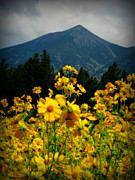 Tickseed Prints - Agassiz Peak High Above the Meadow Print by Aaron Burrows