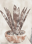 Hall Mixed Media Posters - Agave Poster by Merrily Hall