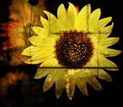 Northwest Art Prints - Aged Sunflower Print by Cathie Tyler