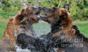 Wildlife Photography Prints - Agree To Disagree Print by Sandra Bronstein