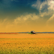 Yellow Sky Prints - Agricultural Landscape At Sunrise Print by Photo by Jim Norris