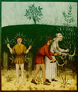Illustration Art Photos - Agriculture-1400s by Science Source