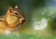 Chipmunk Digital Art - Ah-Choo by Lori Deiter