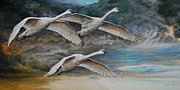 Storm Clouds Painting Originals - Ahead of the Storm - trumpeter swans on the move by Rob Dreyer AFC