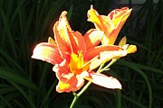 Day Lilly Photos - Ahh Spring Time by Jeremiah Colley