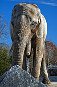 Elephant Photos - Ahh... by Steve Harrington