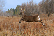 Jim Cumming Art - Air Buck by Jim Cumming