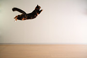 Mid Air Framed Prints - Airborne Cat Framed Print by Junku