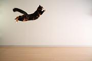 Airborne Cat Print by Junku