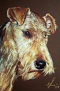 Animal Drawings Prints - Airdale Terrier Print by Elena Kolotusha