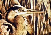 Heron Pyrography - Airone by Ilaria Andreucci