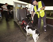 White Russian Photo Posters - Airport Security, Explosives Detection Poster by Ria Novosti