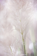 Dof Prints - Airy Softness Print by Jenny Rainbow