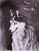 Husky Drawings Metal Prints - Akela Metal Print by Anna  Duyunova