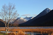 Theresa Willingham - Alaska Autumn